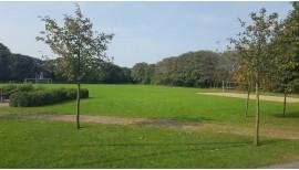 Kräutergarten für die Schule 2