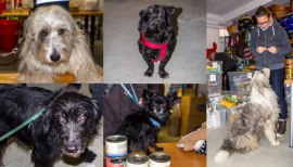 Haustierhilfe Lübeck e.V.: Unterstützung für medizinische Notfälle der Tiere  1
