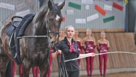 Pferdesport ohne Pferd