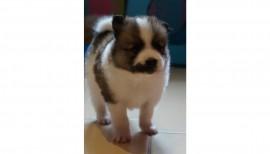 Ivo unser Schulhund