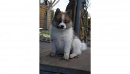 Ivo unser Schulhund 2