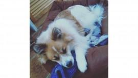 Ivo unser Schulhund 3