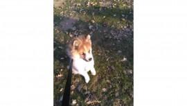 Ivo unser Schulhund 4
