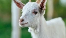 Tierparks erhalten und Versorgung der Tiere sicherstellen 1
