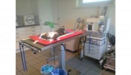 Die Kaninchenhilfe Nordfriesland braucht Unterstützung bei den Tierarztkosten 2